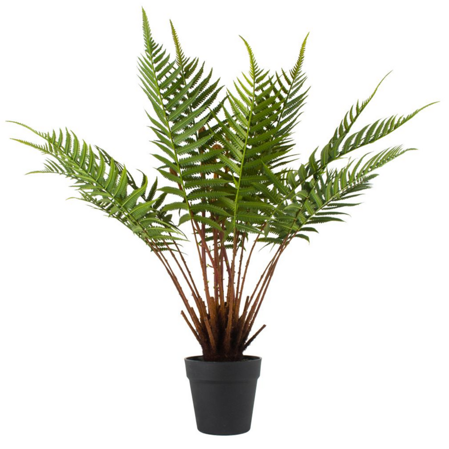 LARGE FERN IN A POT