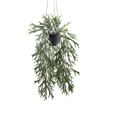 STAG FERN HANGING POT