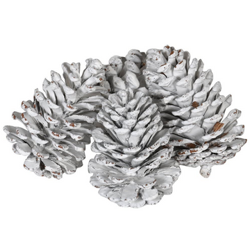 BAG OF WHITE PINE CONES