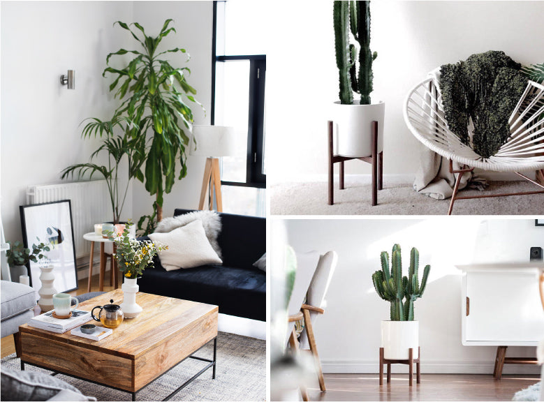 How To Introduce House Plants To Your Modern Interior | AttikoArt Blog