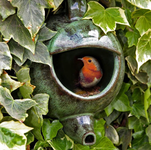 Robin in a green ceramic teapot nester on its side handing in a hedge