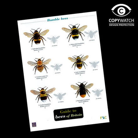 Bees of Britain Field Guide | Peach Perfect