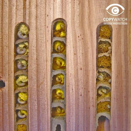 Interactive bee hive by Wildlife World - egg cells - Peach Perfect