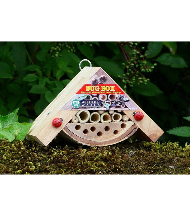 Bobby's minibug box by Wildlife World - Peach Perfect