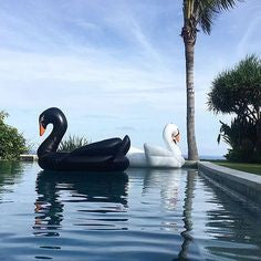 Floating Swan White