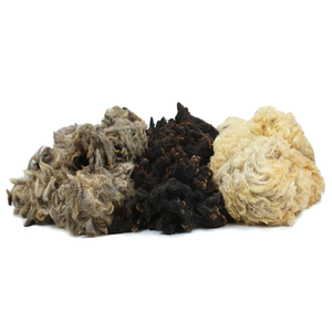 Paradise Fibers Raw Fleece - 1LB-Fiber-Natural Light Ecru Shetland Cross-