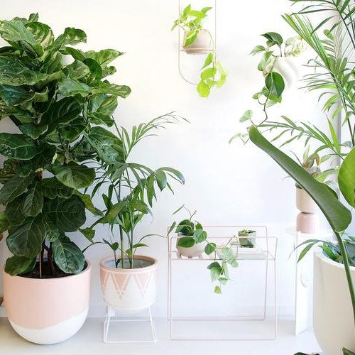 The Houseplant Trend Is Set To Continue In 2020
