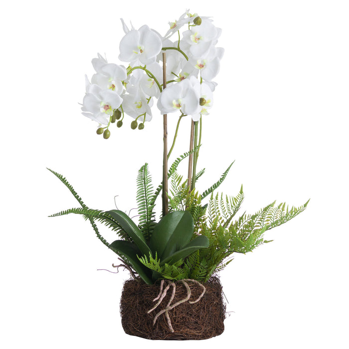 Large White Orchid Phalaenopsis & Fern Garden In Rootball - Artificial Plant