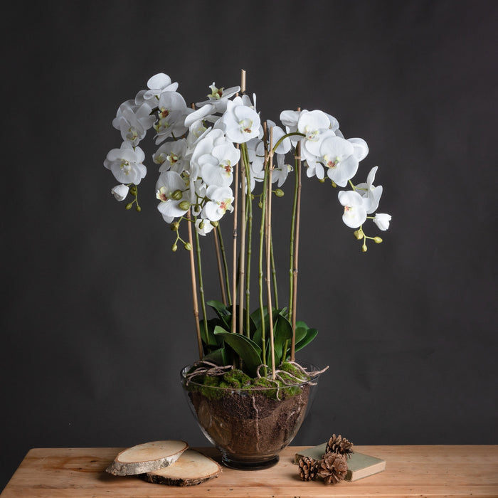 Extra Large White Orchid Phaiaenopsis In Glass Pot
