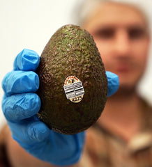 holding california avocado for extra virgin avocado oil