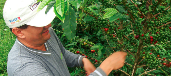 Colombia Huila Finca La Esperanza Single Estate Coffee Grower