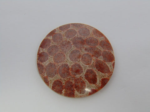 83.10cts Coral