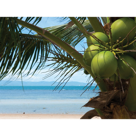 Coconuts Outdoor Canvas Art - The Backyard Bartender