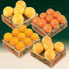 Tasty Citrus Products