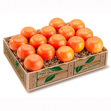 Royal Tangerine - 2 Trays + Deluxe it!