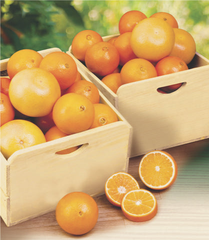 Citrus Field Crate - Oranges and Grapefruit