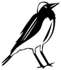 Meet PW (Pied Wheatear) It's Our Icon Logo