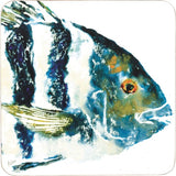 Sheephead Fish Coaster Set of 4