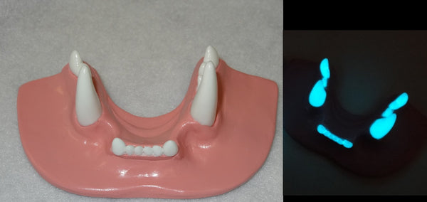 Two Colored Glow in the Dark Small Feline Jawset