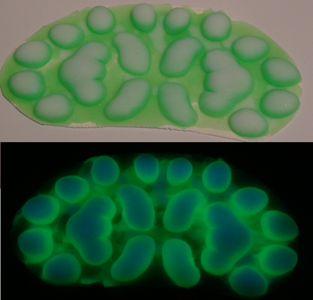Silicone Glow in the Dark Small Anthro K9 Handpads
