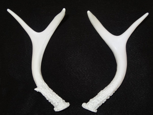 Four Point Deer Antlers