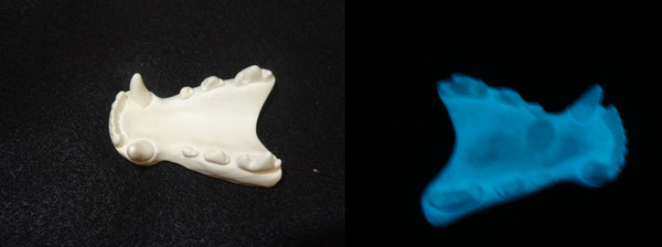 Single Color Glow in the Dark Fox Jawset