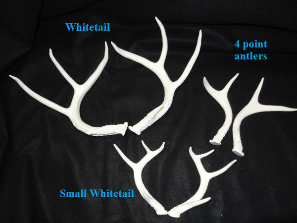 Small Whitetail Deer Antlers