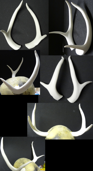 Curled Four Point Deer Antlers