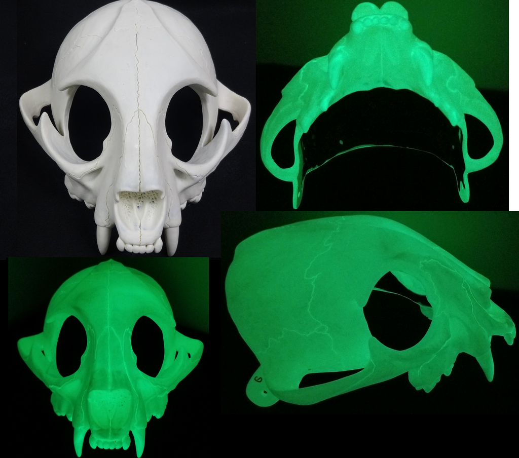 Glow in the Dark Skeletal Feline Upper Jaw Mask