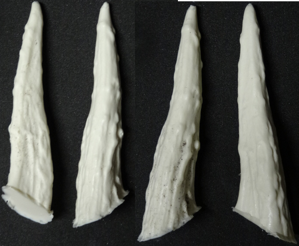 Medium Rigid Antler Tips