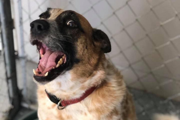 After 7 Years at a Shelter, This Rescue Dog is FINALLY Going Home