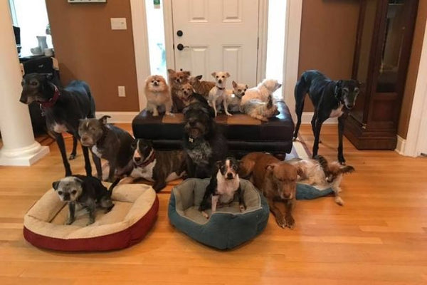 The Memory of One Senior Rescue Dog Has Gone on to Save Over 300 Dogs in Need