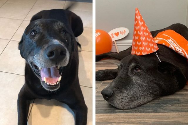 Whataburger Helped Dog With Cancer Have The Best Celebration of Life