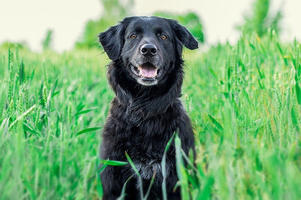 5 Reasons to Choose Organic Dog Treats