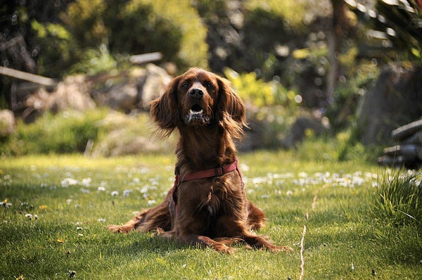 How to Design a Sensory Garden For Your Dog
