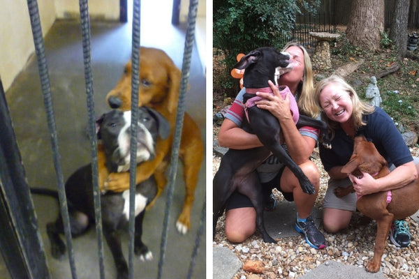 Picture of Shelter Dogs Hugging Ends Up Saving Their Lives