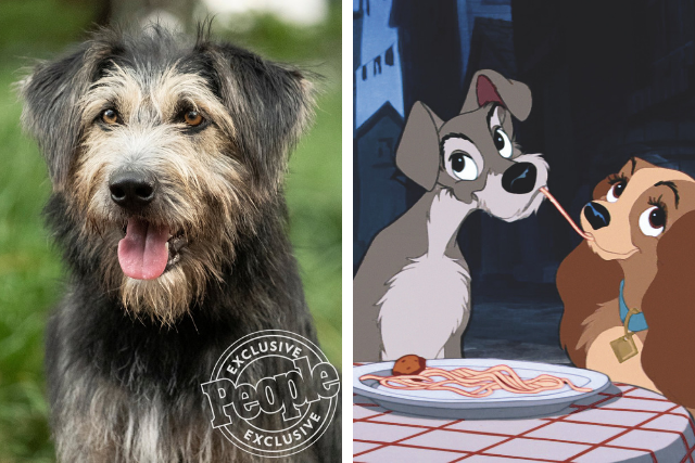 Rescue Dog Cast In Starring Role For Upcoming Lady And The Tramp Rem Riley S Organics