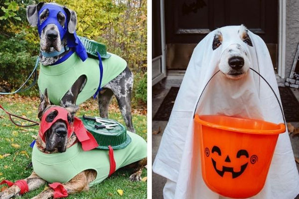 13 Last-Minute Dog Halloween Costumes