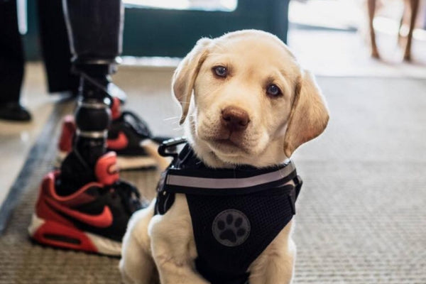 3-Legged Puppy and Double Amputee Veteran Are Working Together To Inspire Others