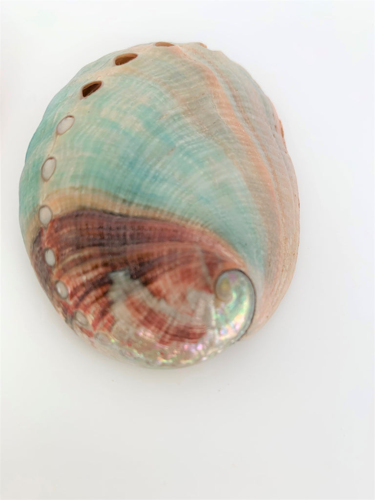 Gaia's Mermaid Shell