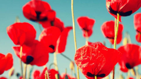 Australia Remembers: WWI Centenary Services, France 2016