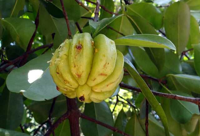 5 Things You Didn't Know About Garcinia Cambogia Pure