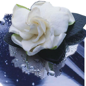 Gardenia Fragrance Oil - Sameh Zahda Custom Hair Care
