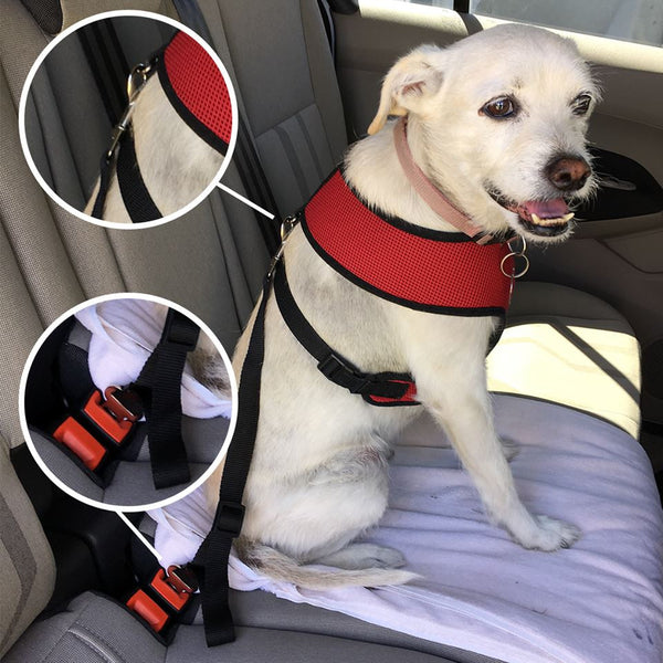 Pet Seat Belt Safety