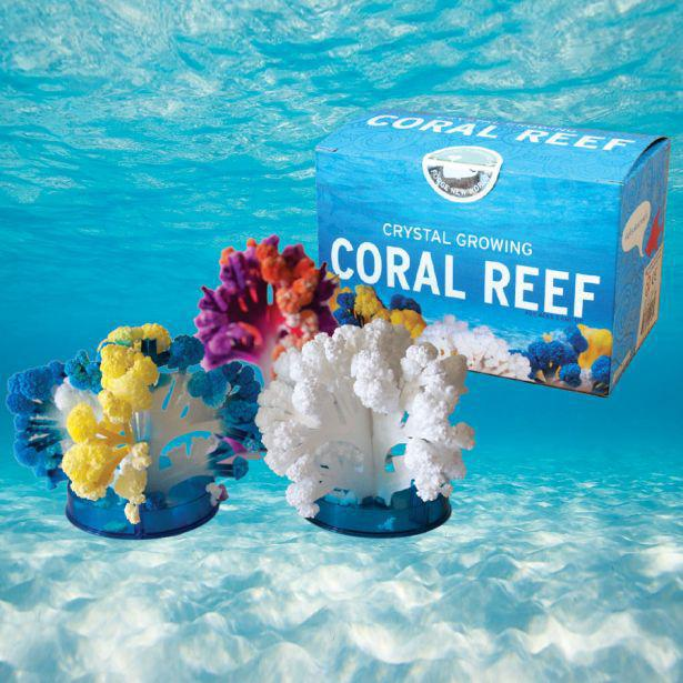 Crystal Growing Coral Reef Kit