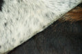 Extra Large Cow Skin Area Rug Cowhide rug 7.8x 6.10 ft -2941 - Rodeo Cowhide Rugs