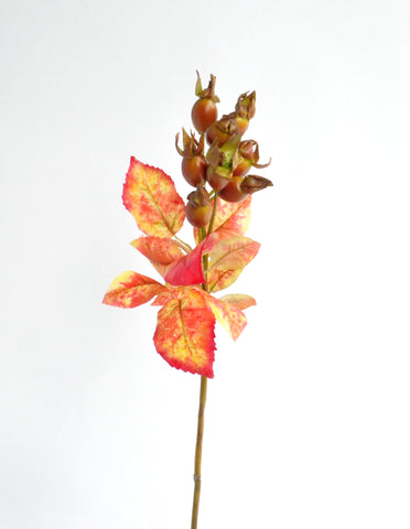 Autumn Garden Rose Hip Stem