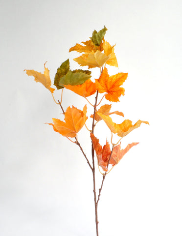 Autumn Sugar Maple Stem