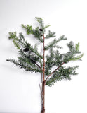 Forest Fir Stem