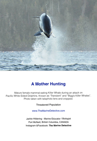 A Mother Hunting